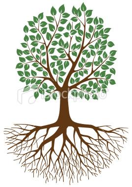 The Family Tree Mole St Nicolas